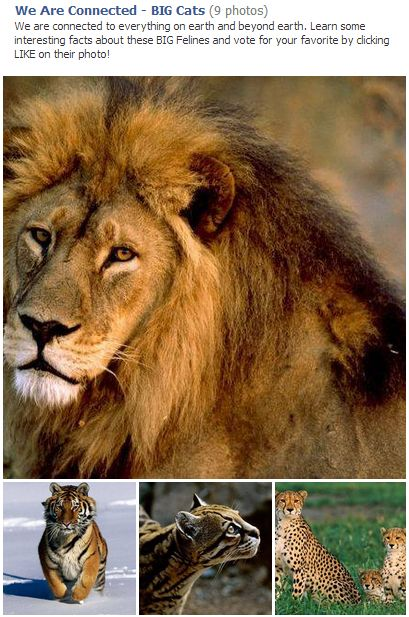 BIG Cats for blog