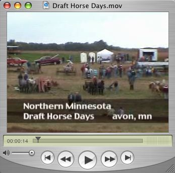 Draft_horse_photo